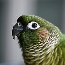 Sidney the Conure by Kimberly Palmer