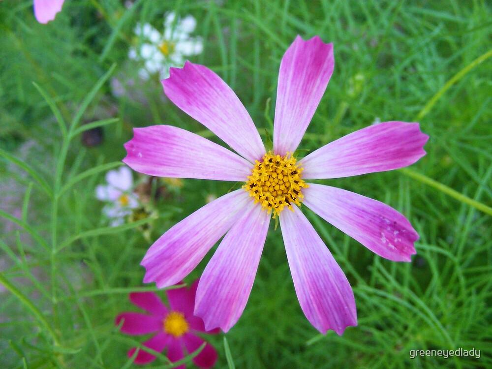 little purple pretty by greeneyedlady