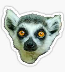 Face of a Ring Tailed Lemur Sticker