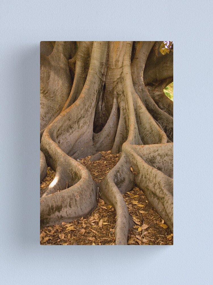 Alternate view of Golden Fig Tree Canvas Print