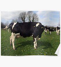 County Clare farm scene Poster