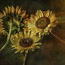 Grungy Sunflowers No. 2 by Barbara Ingersoll