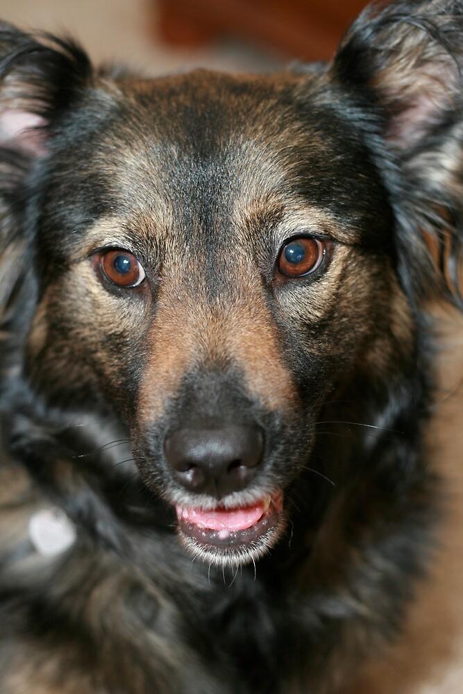 My Dog by CherilynJoy