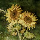 Grungy Sunflowers No. 3 by Barbara Ingersoll