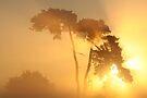 Fire in the Sky by Jo Nijenhuis