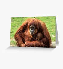 Sumatran orangutan mother with infant In a zoo Greeting Card