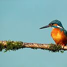 A day in the sunshine for a male Kingfisher by Martin Lawrence