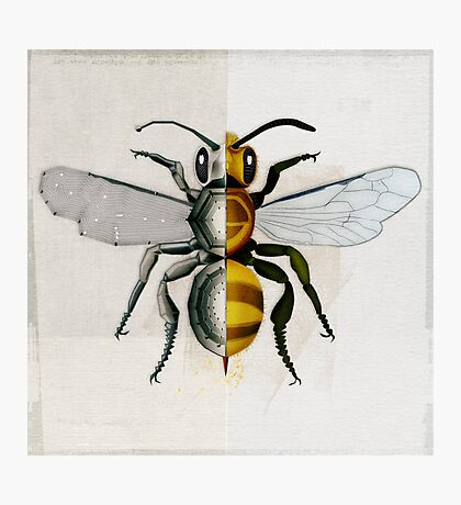 BeeDroid Photographic Print