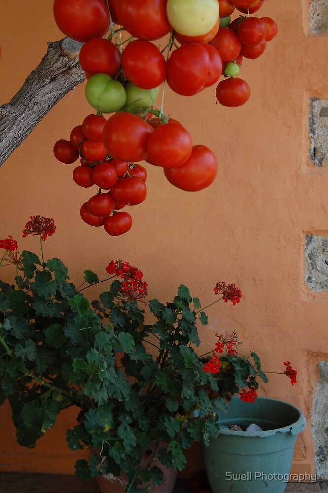 Tomato Tree by Swell Photography