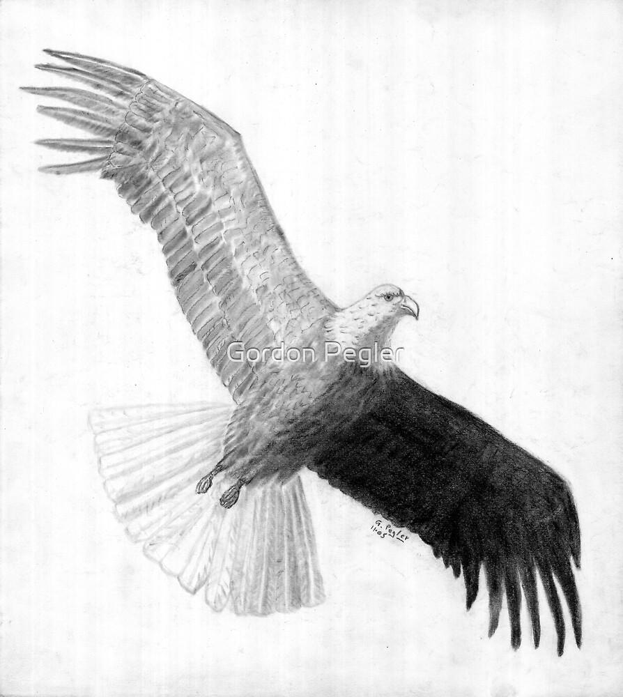 Flying High - Bald Eagle - Charcoal by Gordon Pegler