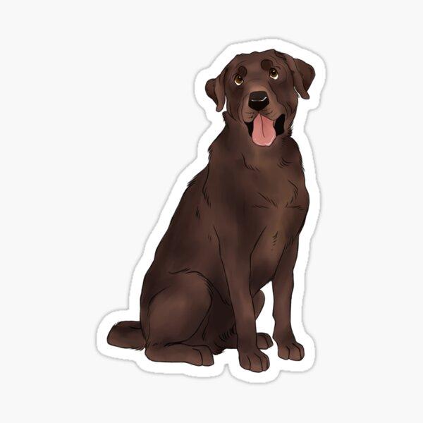 Chocolate Labrador  Sticker