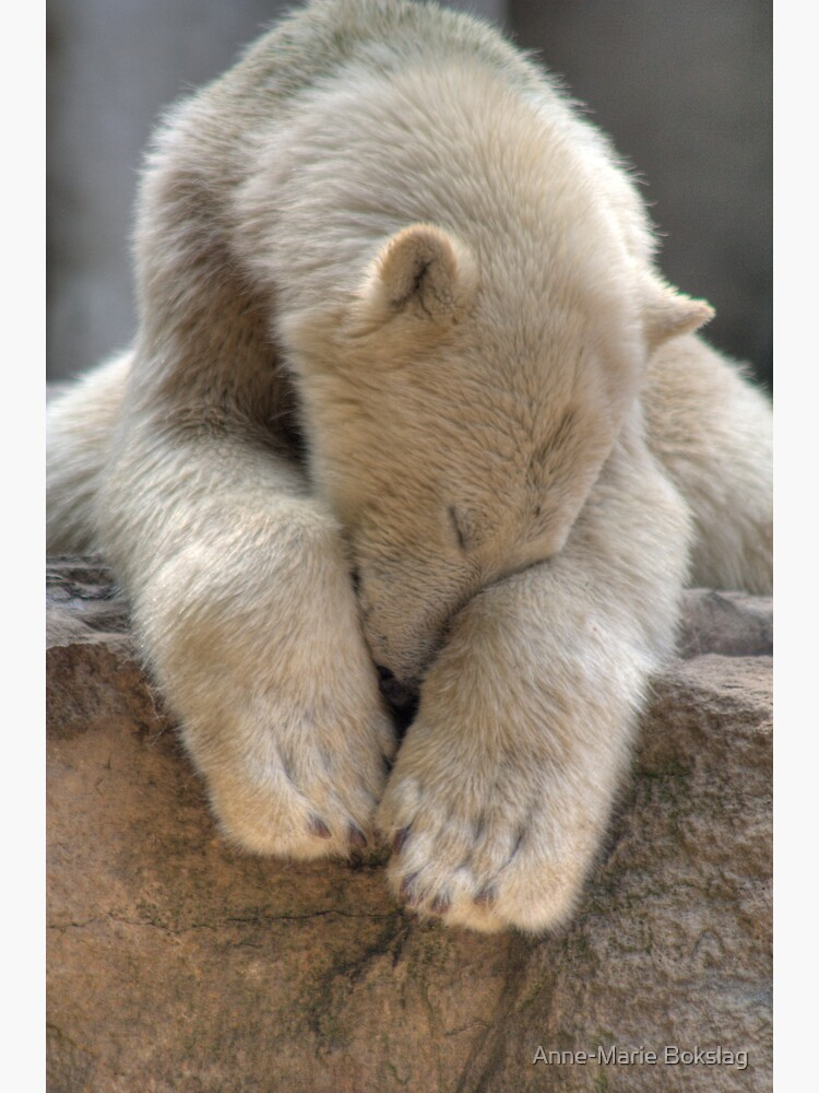 Polar Bear by amb1946