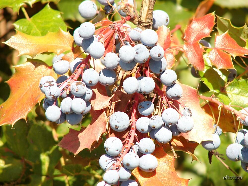 Wild Berries by eltotton