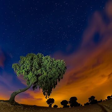 The tree and the blue sky by camisetaencasa