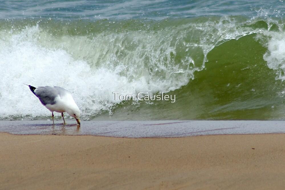 Oscoda Beach Michigan by Tom Causley