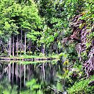 Wild Florida by roselee