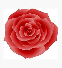 red rose flower Photographic Print