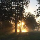 Magical sunrise  by Susanne Schmitz
