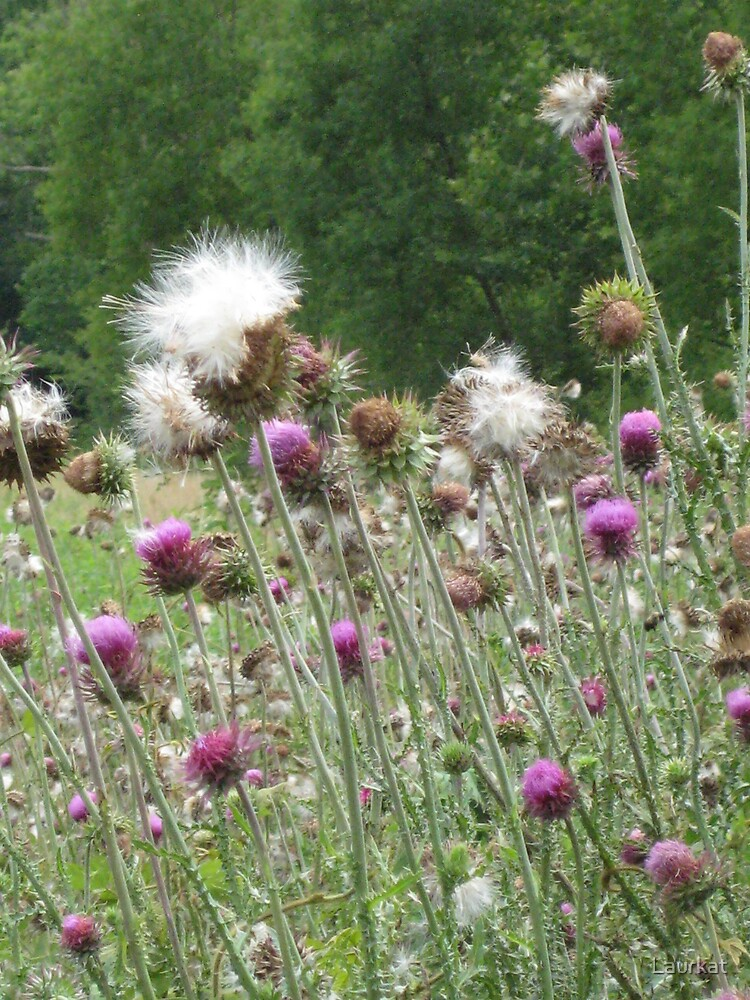 thistle fanfare at meadow's edge by Laurkat