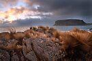 The Nut, Tasmania, Australia by Michael Boniwell
