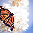 Monarch in Repose by inlightimagery