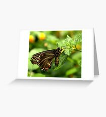 Polydamas Swallowtail Greeting Card