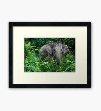 Borneo Pygmy Elephant Framed Print