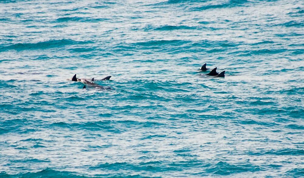 Dolphins by Alecia Scott