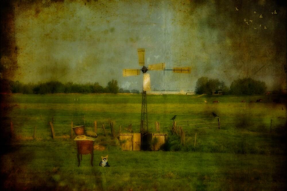 Waiting for Robin by Carla Broekhuizen