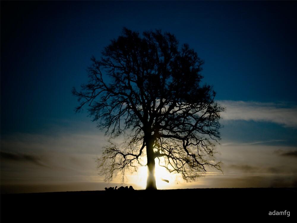 The Glowing tree by adamfg