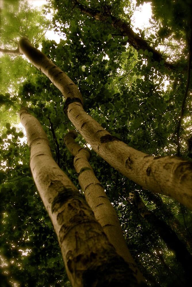 Upward Trees by mkingsley