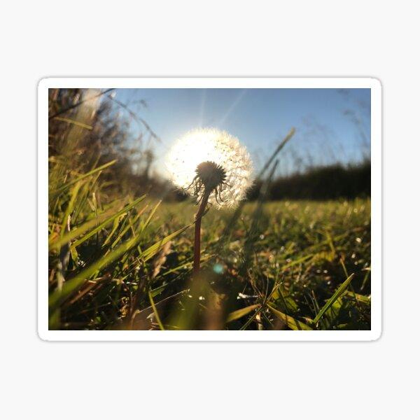 Sunlit Dandelion Sticker