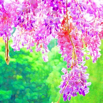 Wisteria in Giverny France by jherbert101