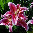 Sunlit Stargazer Lilies by EasterDaffodil