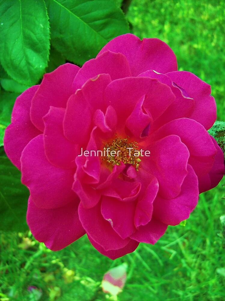 Rose 1 by Jennifer  Tate