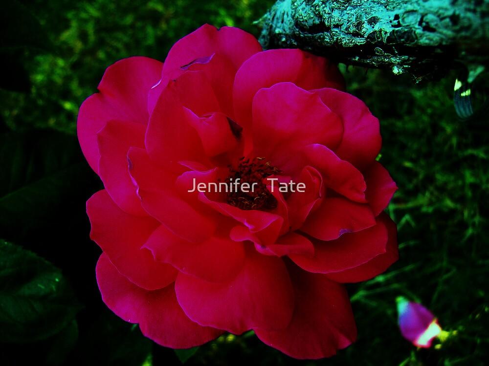 Rose 7 by Jennifer  Tate