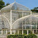 Botanic Gardens by Niamh Harmon