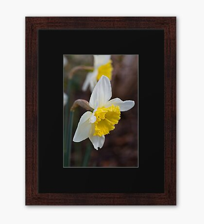 Spring Into It With Daffodils Framed Print