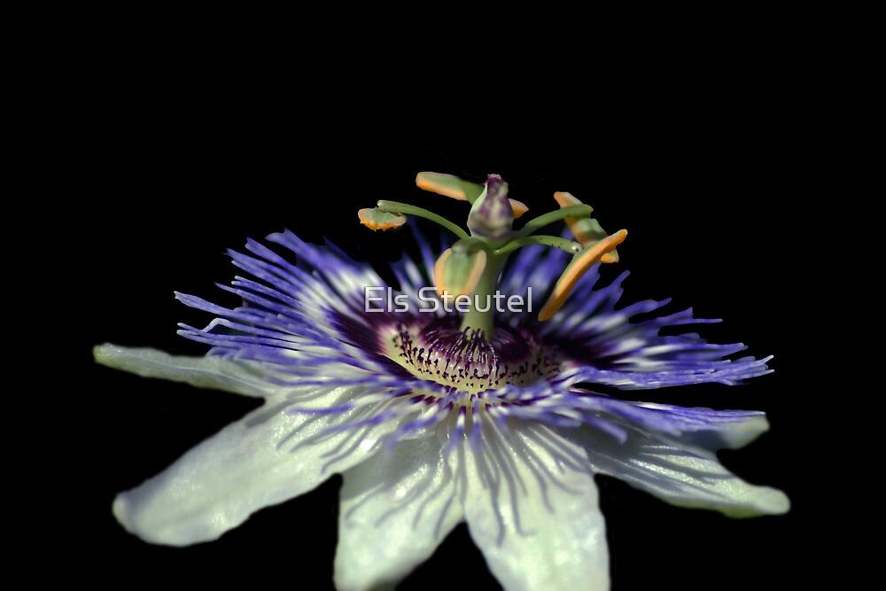 'Passion'Flower by Els Steutel