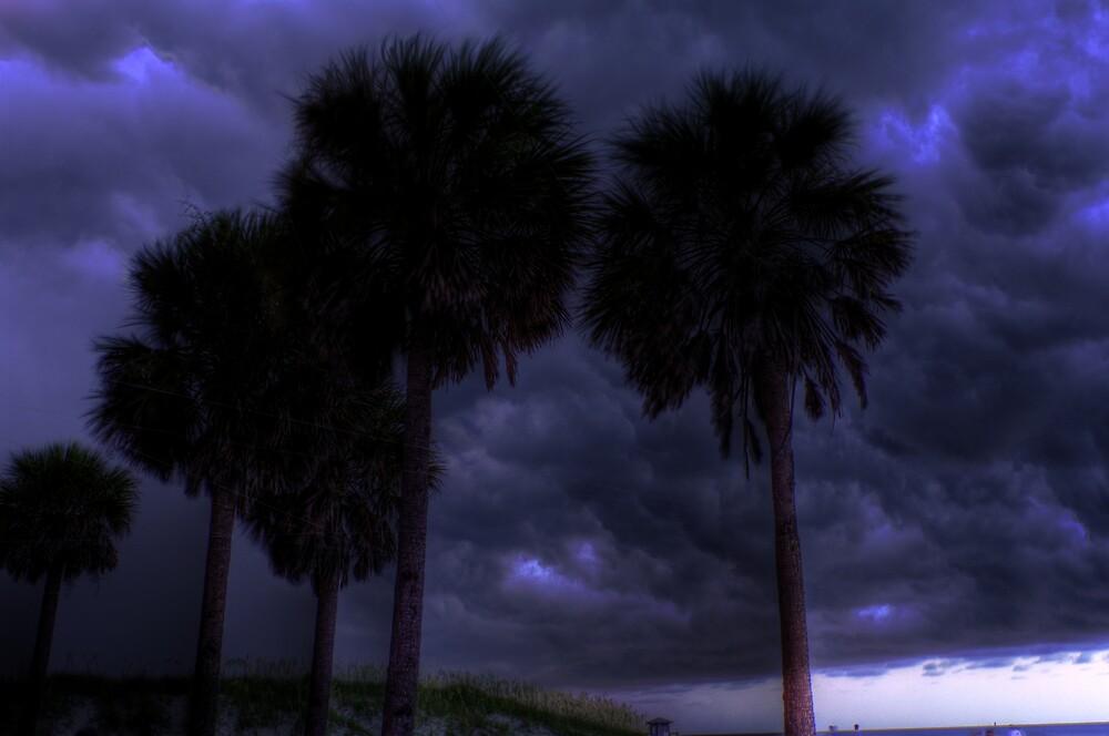 Palm Storm by Michael Gatch