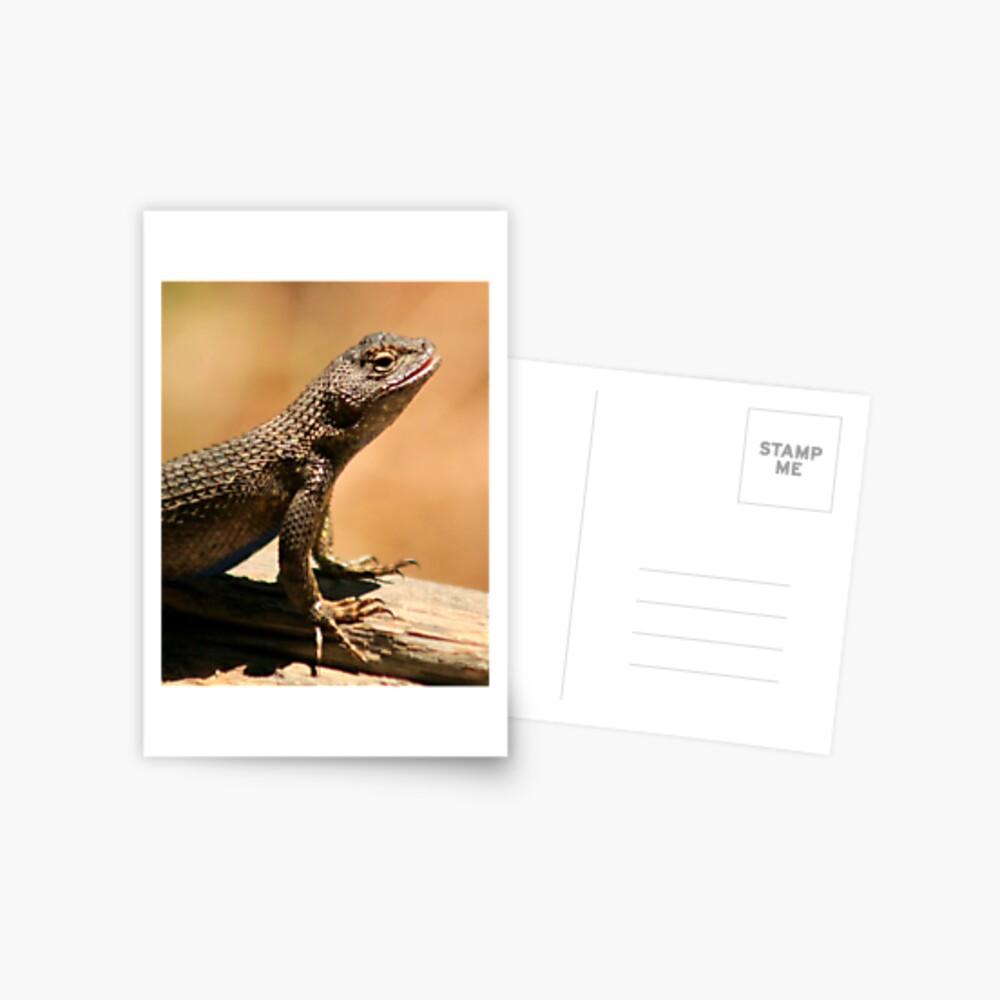 Western Fence Lizard Postcard