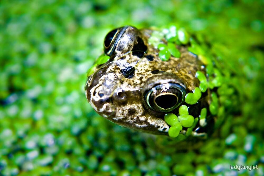 froggie by ladytwiglet
