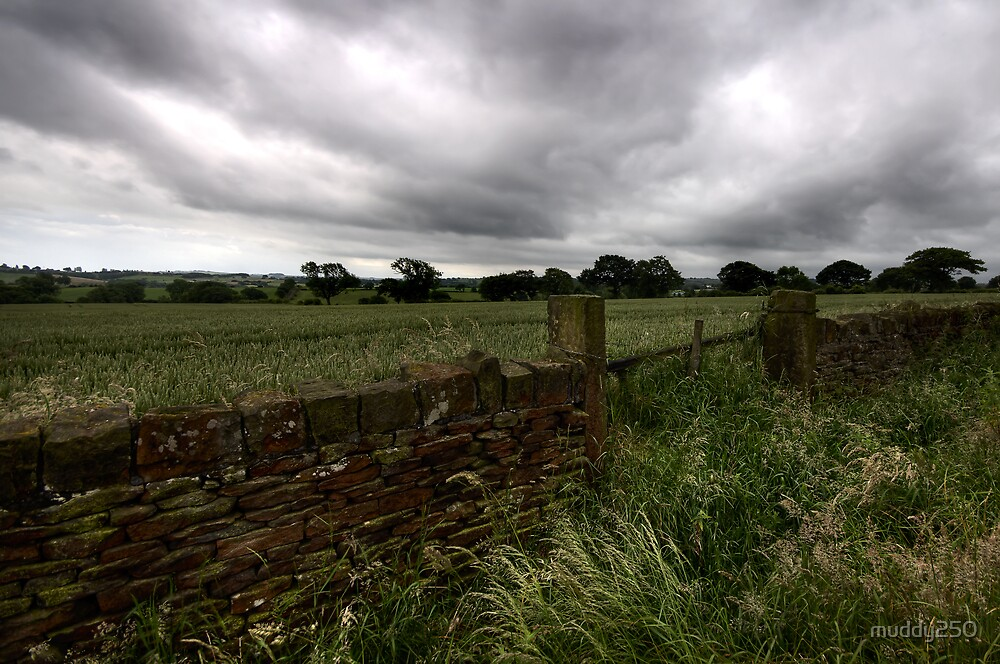 Field Gate by Chris Charlesworth
