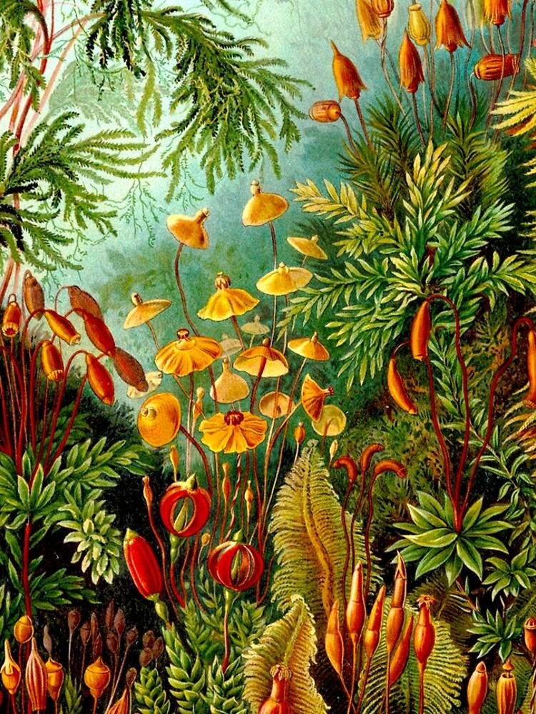 FLOWER GARDEN; Vintage Art Print by posterbobs