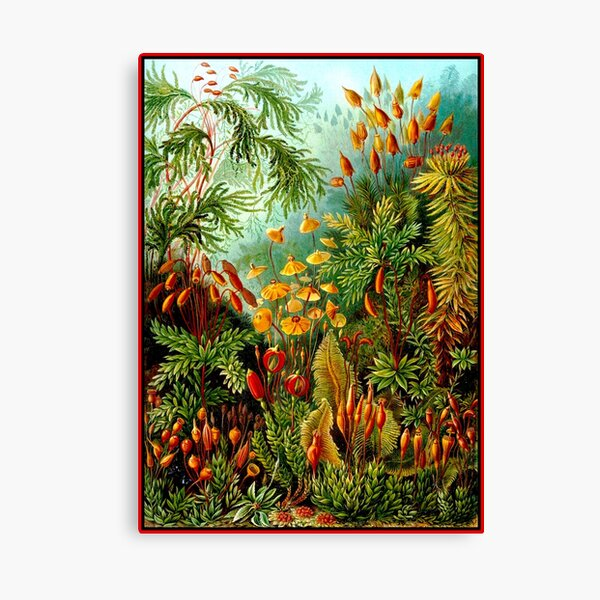 FLOWER GARDEN; Vintage Art Print Canvas Print