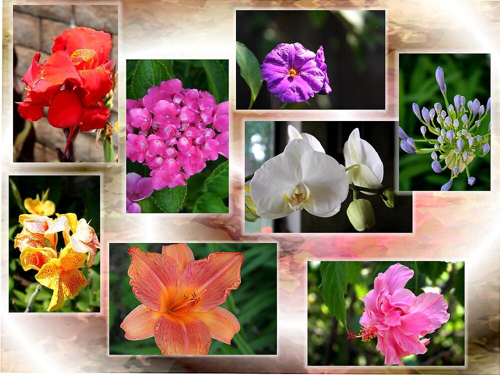 Collage of Flowers by Liz Wear