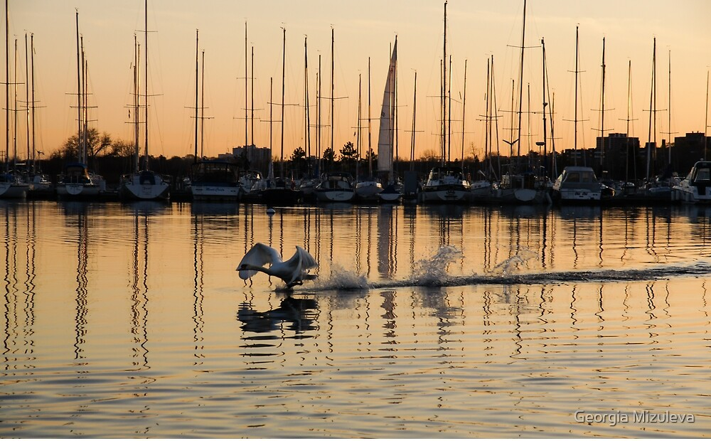 The Golden Takeoff - Swan, Sunset and Yachts at the Marina  by Georgia Mizuleva