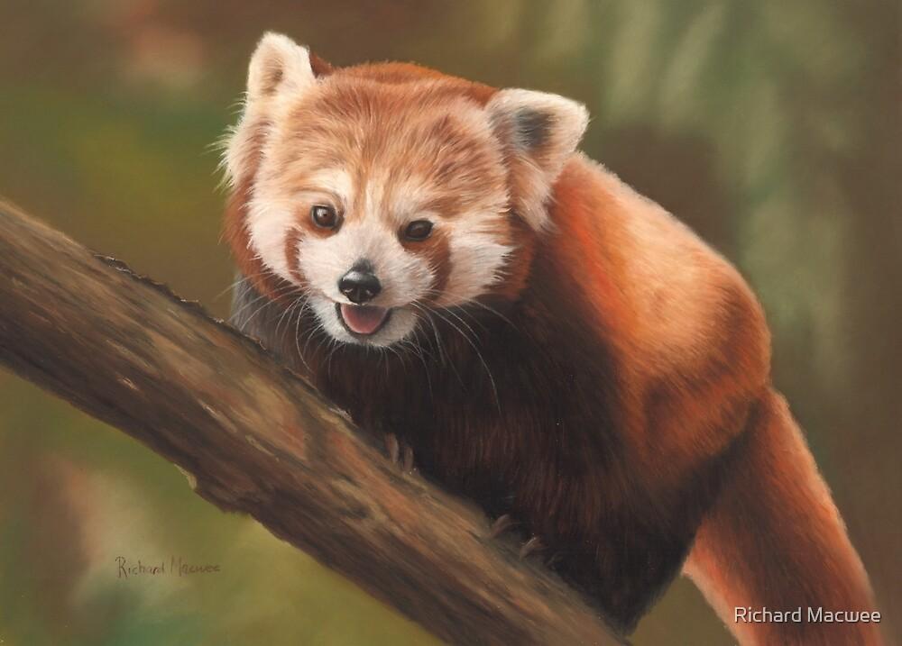 Red Panda by Richard Macwee