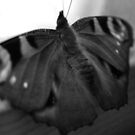 Butterfly in black and white by Perggals© - Stacey Turner