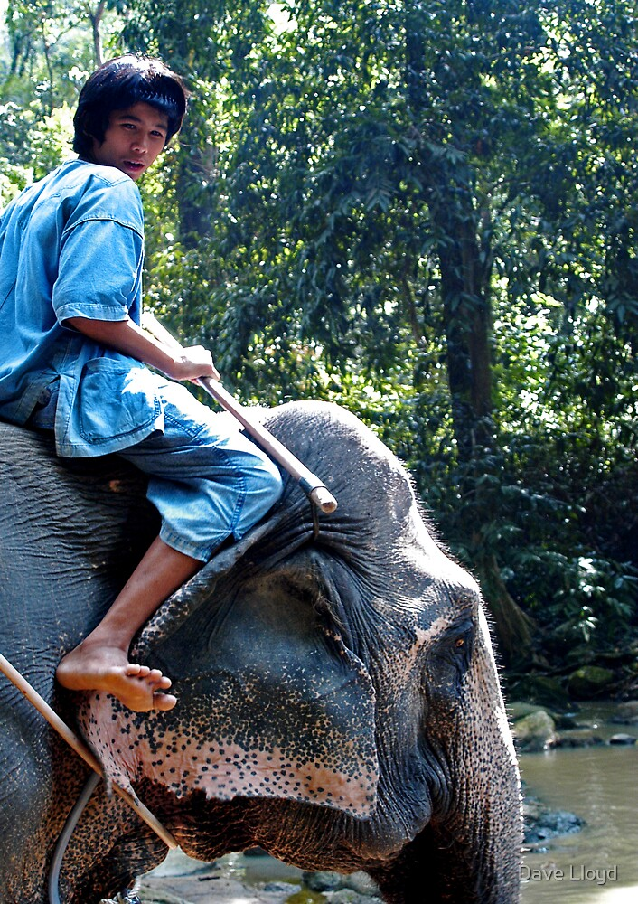 Elephant Boy by Dave Lloyd